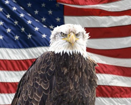 Bald Eagle #2120-2