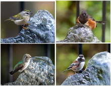 Bubbler birds - Set #1