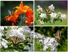 Butterflies - Set #11