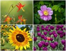 Flowers - Set #2