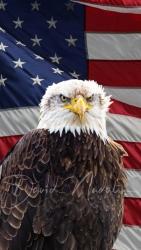 Bald Eagle & flag composite 2021